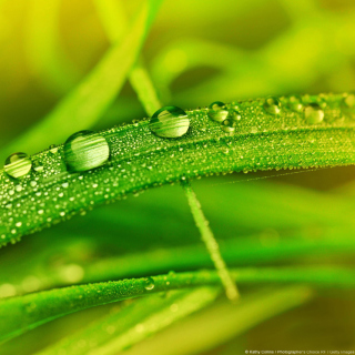 Dew on Grass - Obrázkek zdarma pro iPad 2
