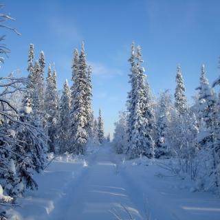 Snowy winter - Obrázkek zdarma pro 320x320