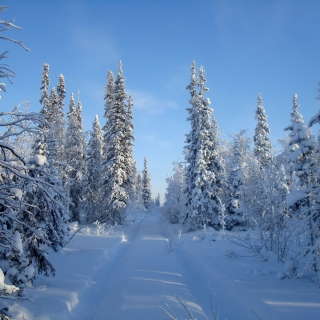 Snowy winter - Obrázkek zdarma pro iPad mini 2