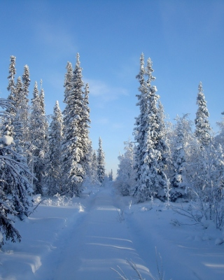 Snowy winter - Obrázkek zdarma pro Nokia X2