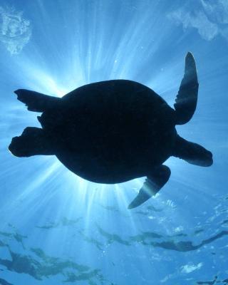Turtle near Maldives - Obrázkek zdarma pro 768x1280
