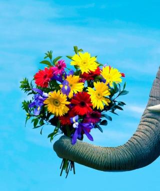 Elephant's Gift - Obrázkek zdarma pro Nokia Asha 503