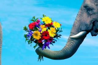 Elephant's Gift Picture for Android, iPhone and iPad