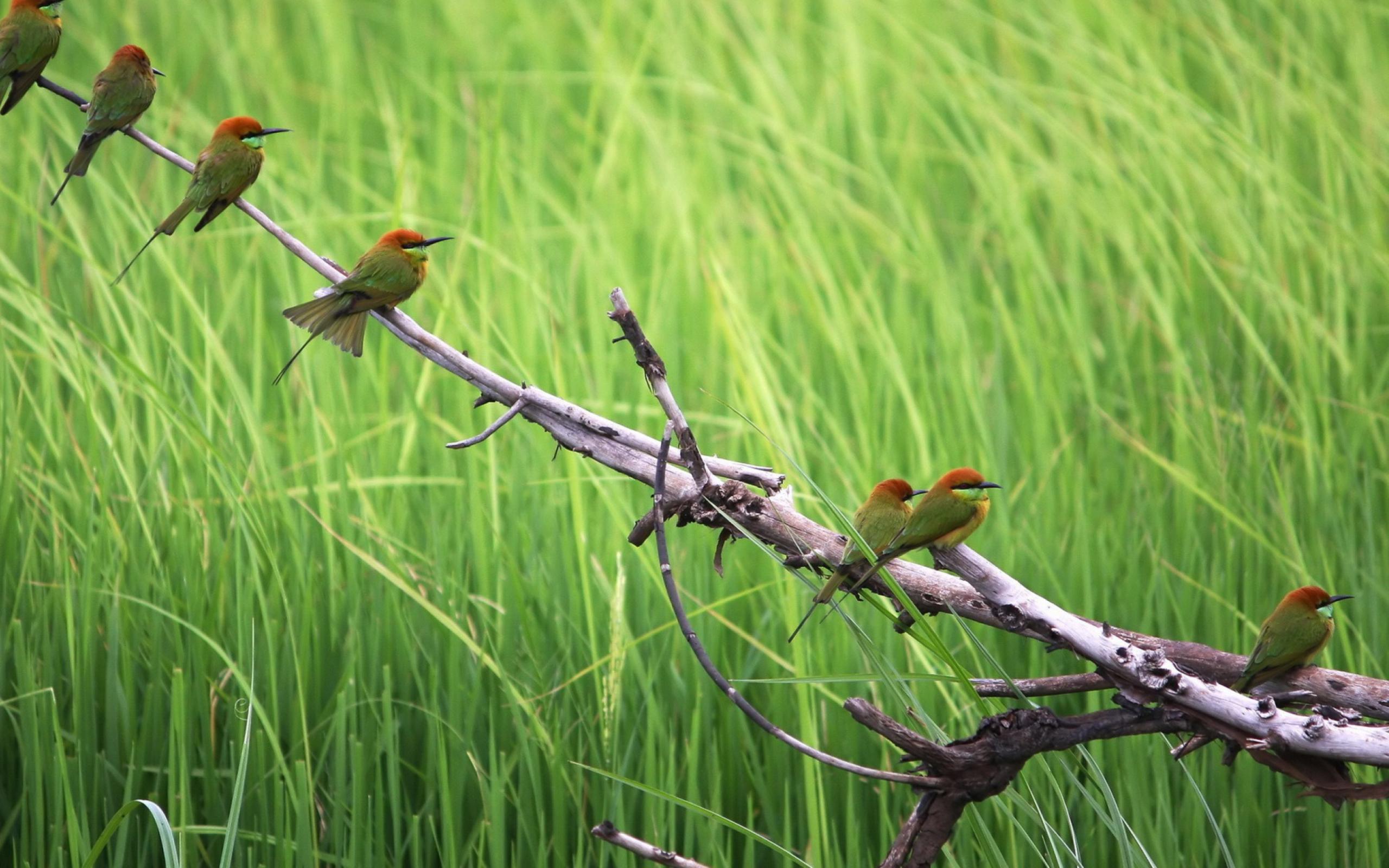 Две птички на стебле кукурузы  № 1532805 без смс