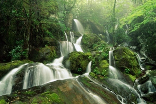 Tropical Forest Waterfall Background for Android, iPhone and iPad