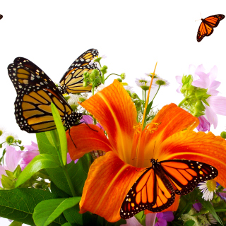 Lilies and orange butterflies - Obrázkek zdarma pro 208x208