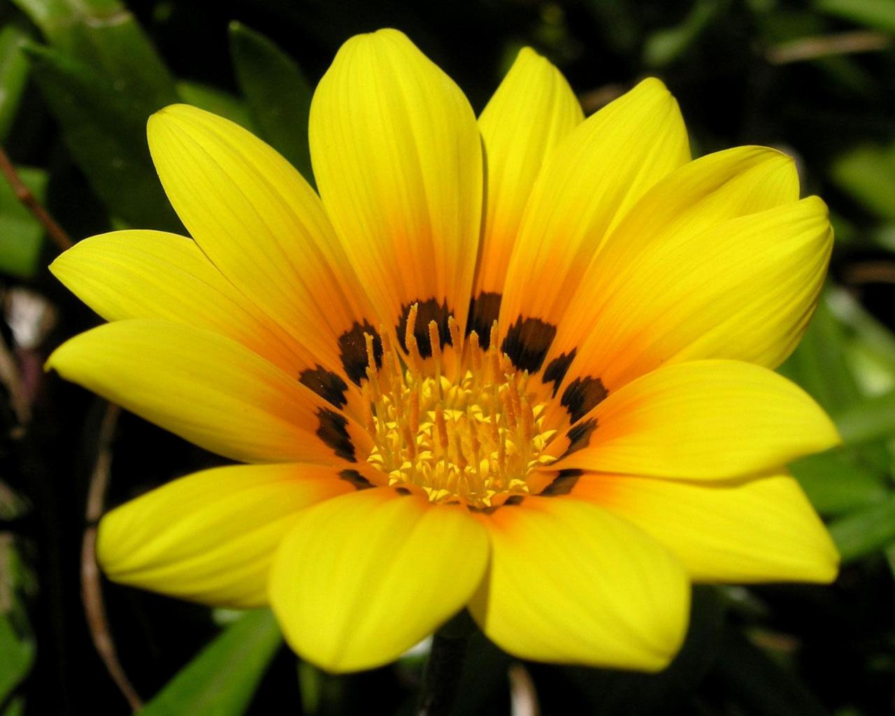 Желтый цветок  № 671087 загрузить