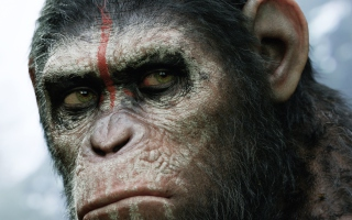 Free Dawn Of The Planet Of The Apes 2014 Picture for Android, iPhone and iPad
