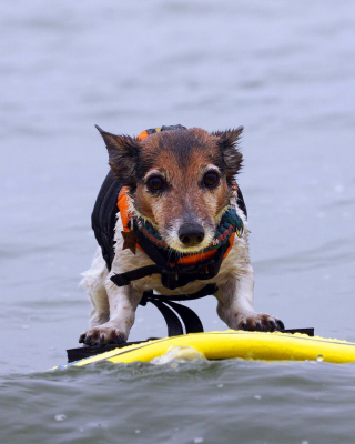 Surfing Puppy - Obrázkek zdarma pro 240x320