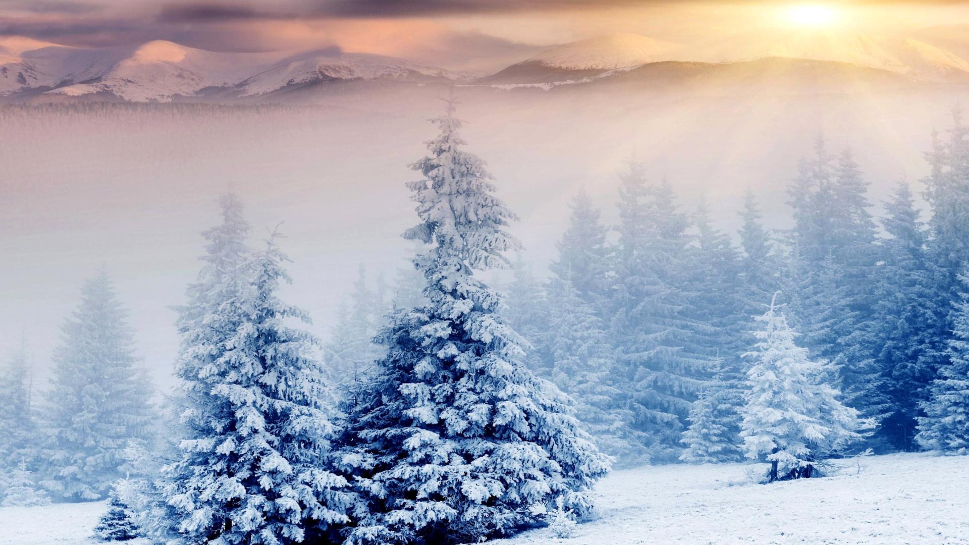 Winter nature in prisma editor sfondi gratuiti per desktop - Nature wallpaper editor ...