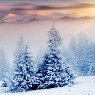 Winter Nature in Prisma Editor - Obrázkek zdarma pro iPad Air