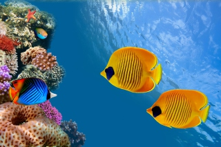 Maldives Coral Colony Wallpaper for Android, iPhone and iPad