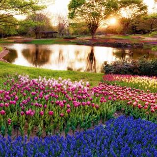 Tulip park on Mainau island in Baden Wurttemberg - Obrázkek zdarma pro 1024x1024