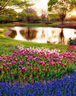 Tulip park on Mainau island in Baden Wurttemberg - Obrázkek zdarma pro Nokia Lumia 800