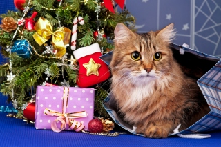 Kostenloses Merry Christmas Cards Wishes with Cat Wallpaper für Android, iPhone und iPad