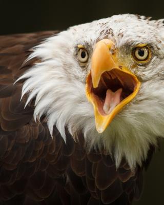 Eagle - Obrázkek zdarma pro iPhone 5