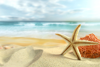 Starfish On Beach Wallpaper for Android, iPhone and iPad