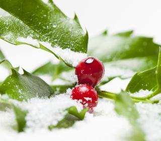 Frozen Cranberries - Obrázkek zdarma pro 2048x2048