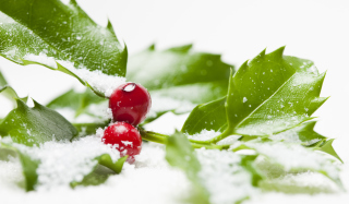 Frozen Cranberries Wallpaper for Android, iPhone and iPad