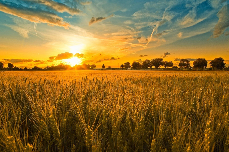 солома поле небо облака straw field the sky clouds  № 1783602 бесплатно