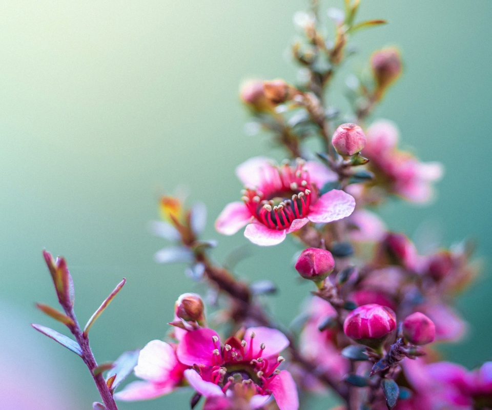 Spring Pink Flowers Wallpaper For Nokia XL