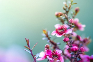 Spring Pink Flowers Wallpaper for Android, iPhone and iPad
