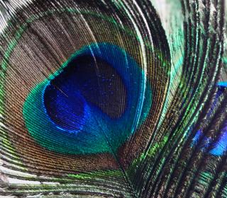 Peacock Feather - Obrázkek zdarma pro 1024x1024