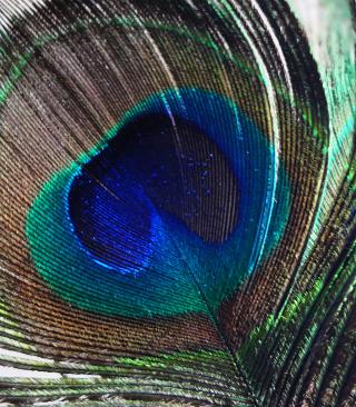 Peacock Feather - Obrázkek zdarma pro Nokia X7