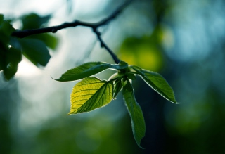Green Leaves Background for Android, iPhone and iPad