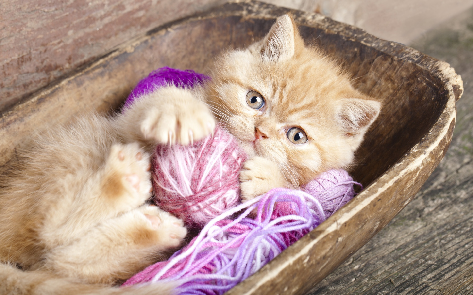 Cute Kitten Playing With A Ball Of Yarn Wallpaper For