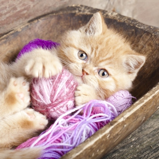 Cute Kitten Playing With A Ball Of Yarn - Obrázkek zdarma pro 320x320