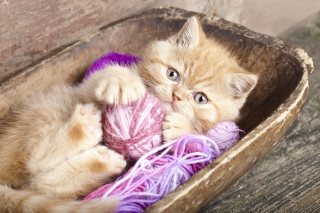 Cute Kitten Playing With A Ball Of Yarn - Obrázkek zdarma pro Fullscreen Desktop 1024x768