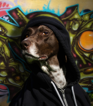 Portrait Of Dog On Graffiti Wall - Obrázkek zdarma pro Nokia C2-00