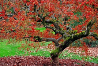 Red Leaves In Autumn Picture for Android, iPhone and iPad