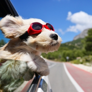 Dog in convertible car on vacation - Obrázkek zdarma pro 2048x2048