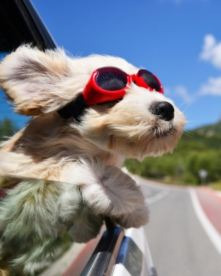 Dog in convertible car on vacation - Obrázkek zdarma pro 640x960