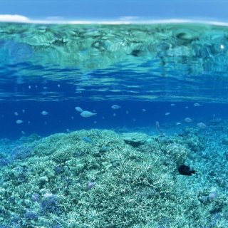 Underwater World - Obrázkek zdarma pro iPad