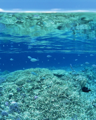 Underwater World - Obrázkek zdarma pro Nokia 300 Asha