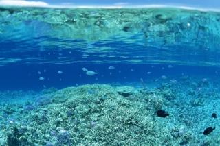 Underwater World - Obrázkek zdarma pro HTC Desire HD