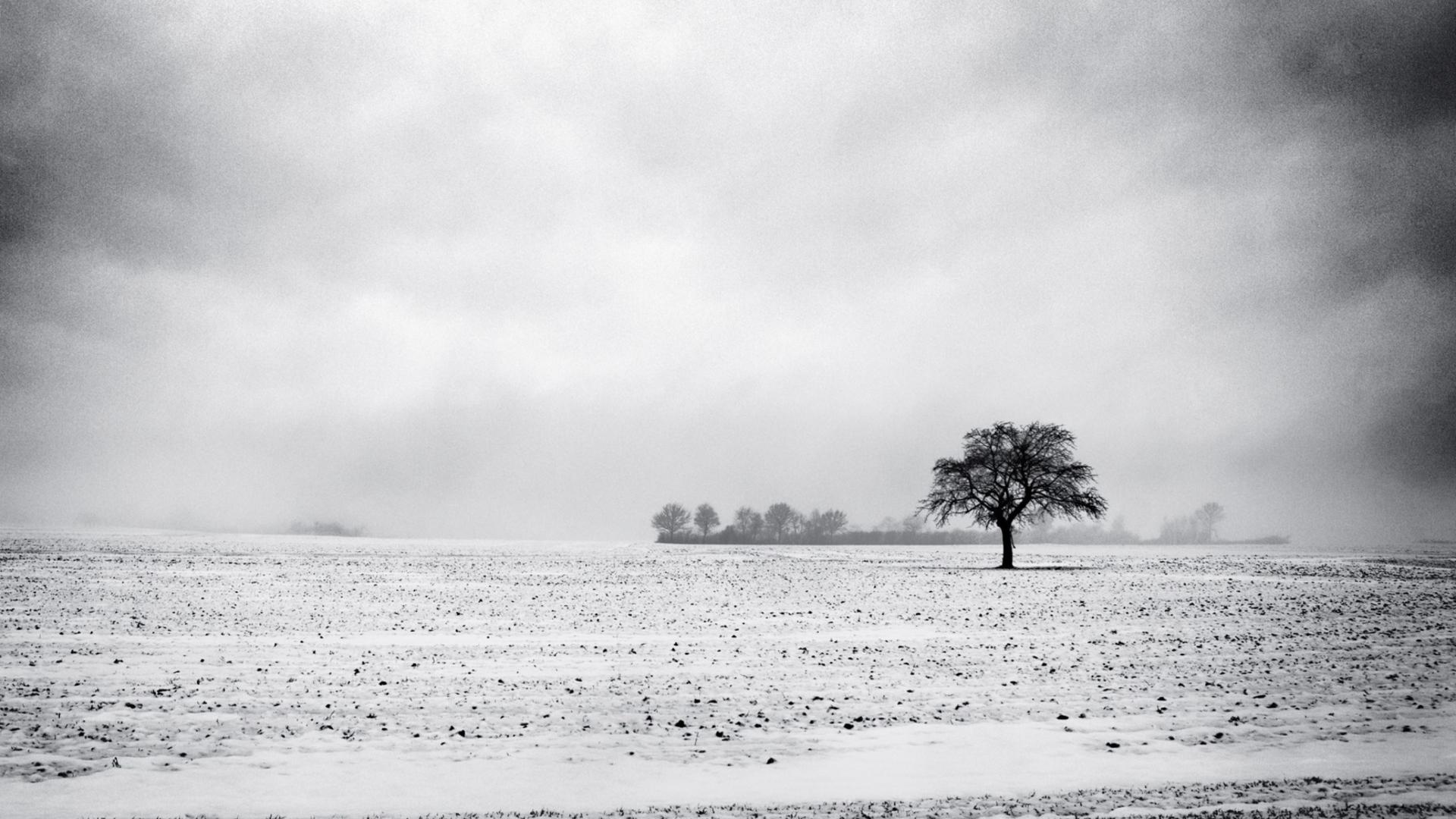 Black and white winter fondos de pantalla gratis para for Fondos de escritorio full hd