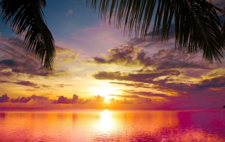 Sunset Between Palm Trees Wallpaper for Android, iPhone and iPad