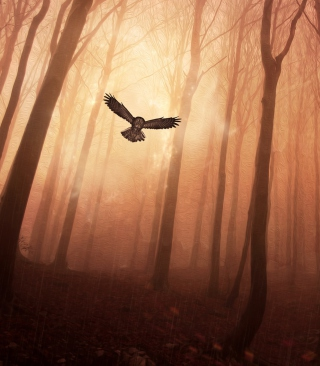 Dark Owl In Dark Forest - Obrázkek zdarma pro 176x220