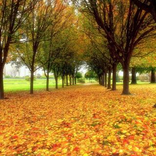 Autumn quiet park - Obrázkek zdarma pro iPad Air