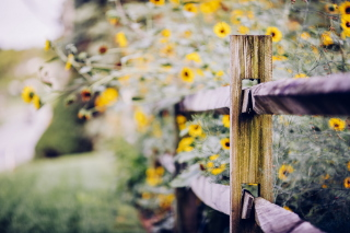 Yellow Flowers Behind Fence Background for Android, iPhone and iPad