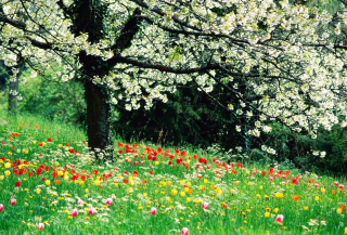 Spring Forest Flowers Background for Android, iPhone and iPad