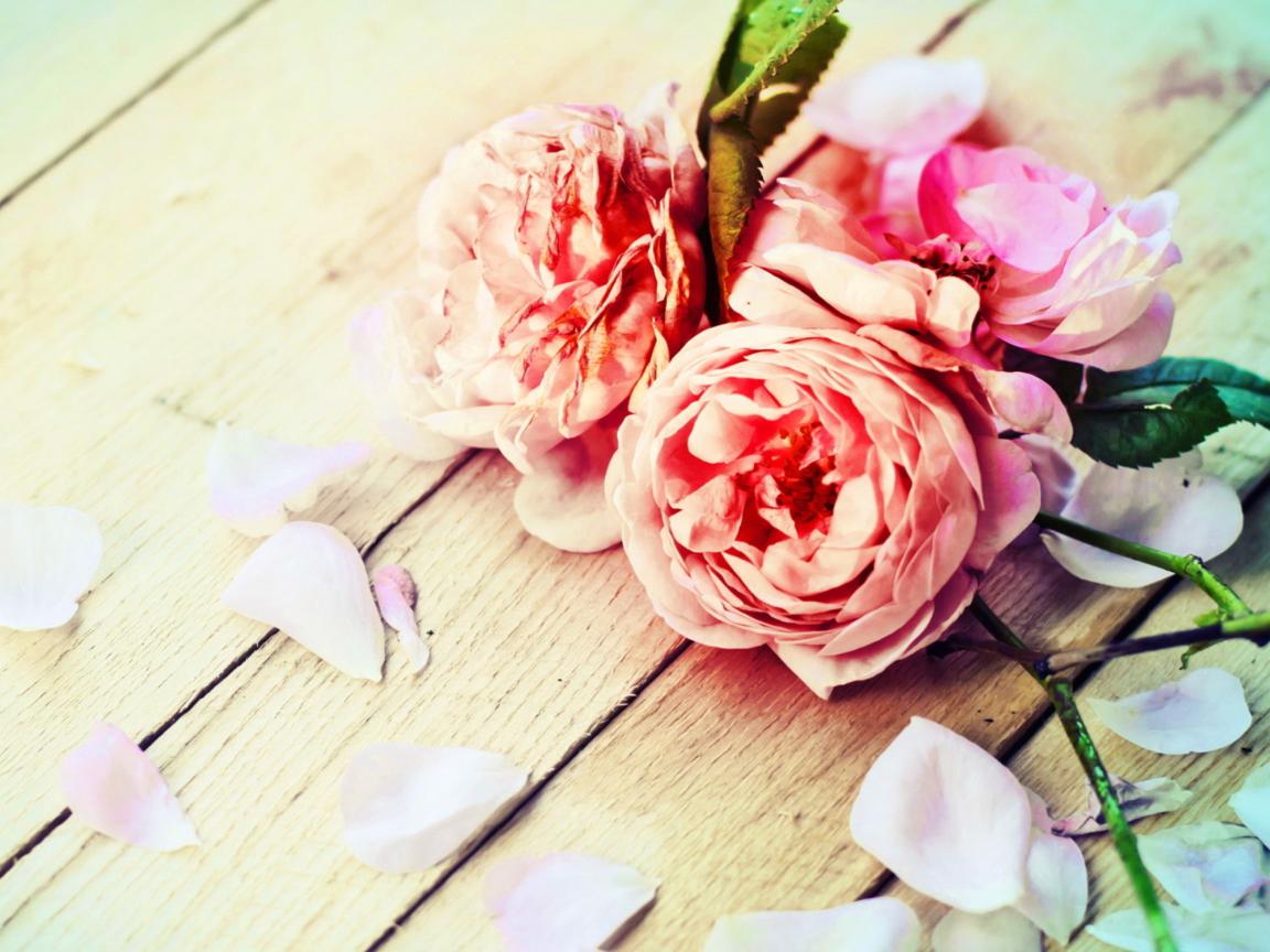 обои для рабочего стола пионы розы № 422827 без смс