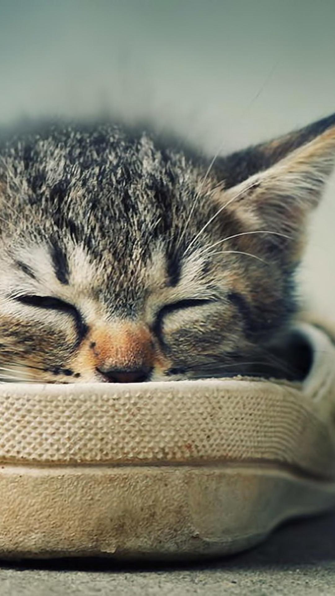 котенок в ботинке  № 2016543 бесплатно