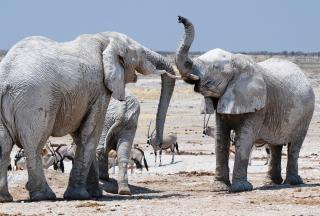 Elephants - Obrázkek zdarma pro Samsung Galaxy Tab 4 7.0 LTE