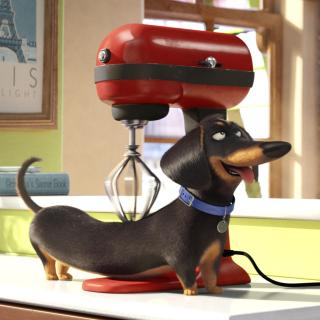 The Secret Life of Pets - Obrázkek zdarma pro 208x208