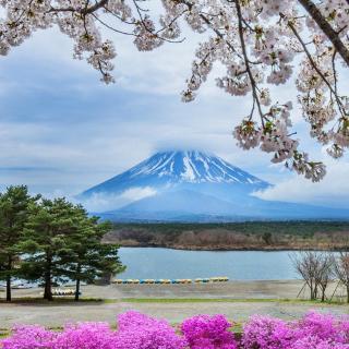 Spring in Japan - Obrázkek zdarma pro iPad 2